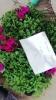Blumenverdeelung 2016